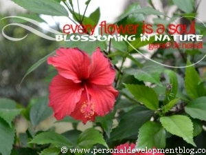 Every Flower Is A Soul Blossoming In Nature by Gerard De Neval Inspirational Wallpaper | Personal Development Inspirational Wallpaper | Inspirational Poster | Motivational Poster | Motivational Wallpaper