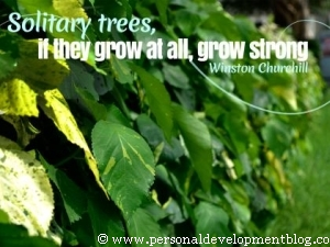 Solitary Tress, If They Grow At All, Grow Strong Inspirational Wallpaper | Winston Churchill | Personal Development Inspirational Wallpaper | Inspirational Poster | Motivational Poster | Motivational Wallpaper