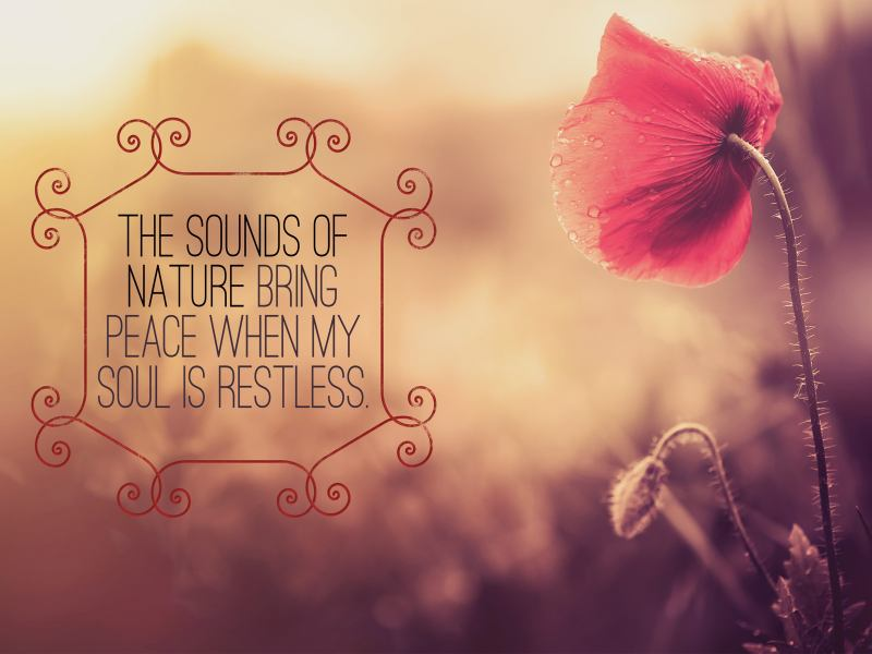 Sounds of Nature Bring Peace