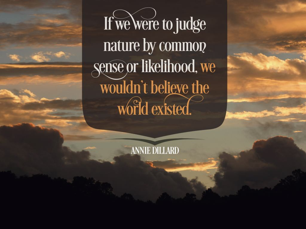 To Judge Nature by Annie Dillard