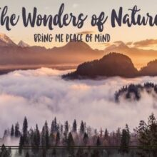 The Wonders of Nature Printable Wall Art